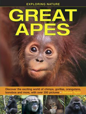 Image for Exploring Nature Great Apes: Discover the exciting world of chimps, gorillas, orangutans, bonobos and more